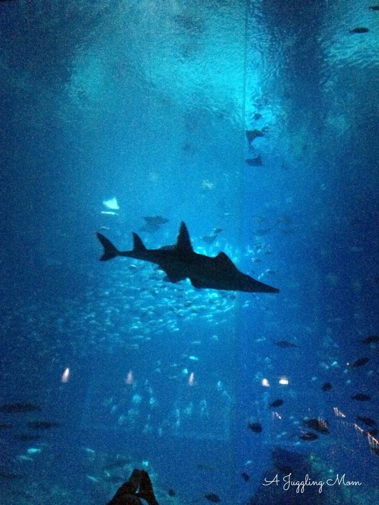 Th mesmerizing sea life before us