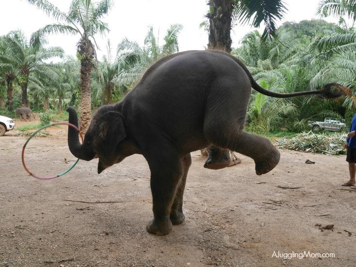 Elephant trekking Krabi 002