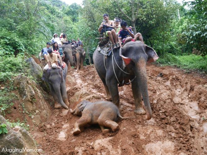 Elephant trekking Krabi 004