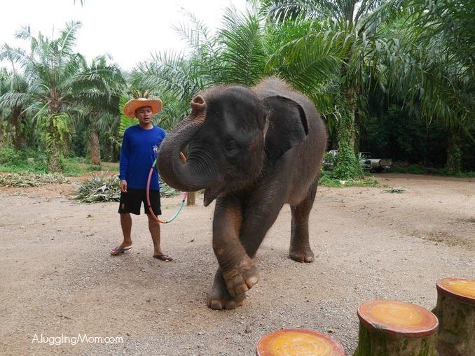 Elephant trekking Krabi