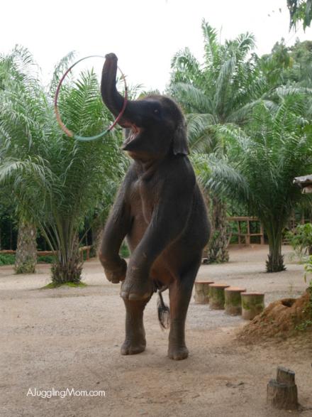 Elephant trekking Krabi 001