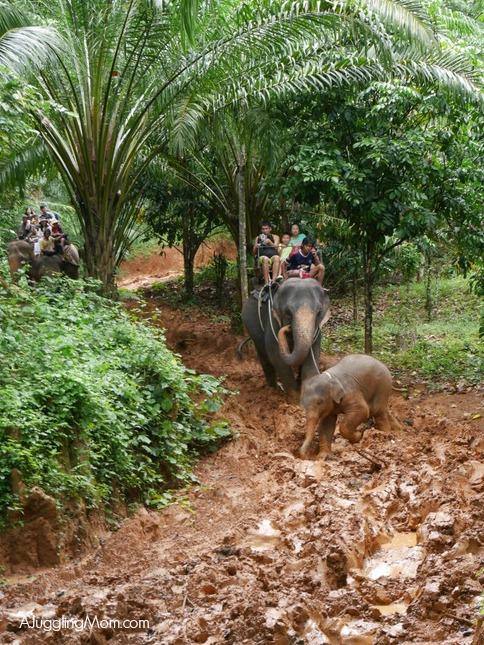 Elephant trekking Krabi 008